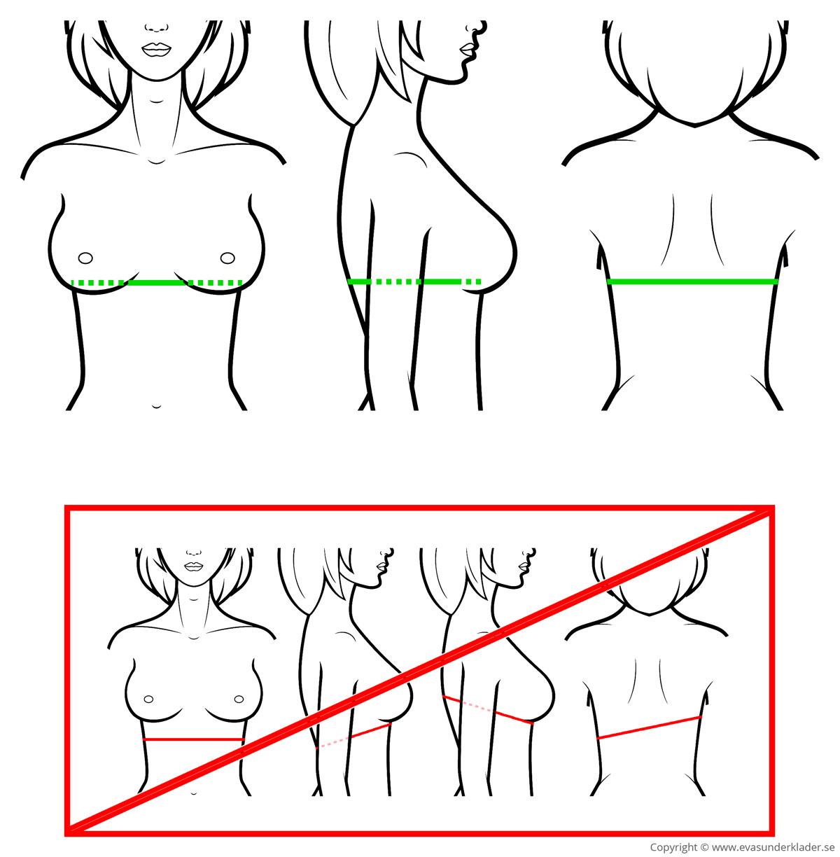 Placering av måttband vid mätning av ryggbandsmått.
